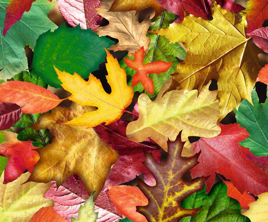 Kartong pildiga Ursus 49.5x68cm/300g Forest Leaves