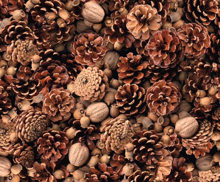 Kartong pildiga Ursus 49.5x68cm/300g Nuts/Fir Cone